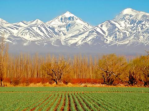 Mendoza1.jpg